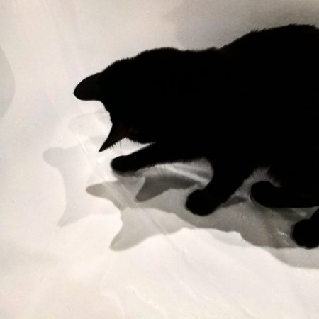 cat bathtub