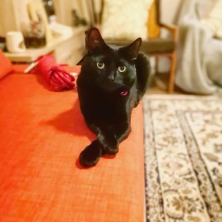 cat concerned