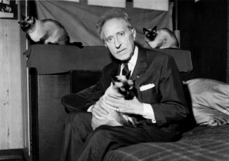 Cocteau and cats